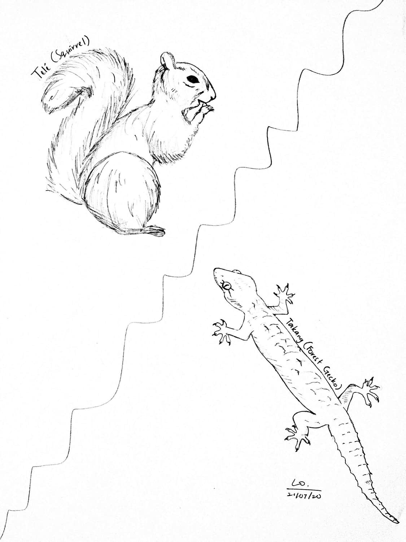 squirrel gecko